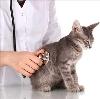 Ветеринарные клиники в Волоконовке